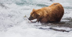 A Bear's Dinner by Mark Nicholas