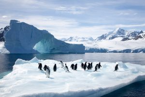 Penguins on Ice by Mark Nicholas